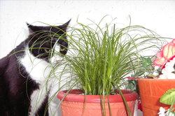 Einige Zimmerpflanzen sind für Katzen giftig.