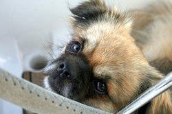 Für das tierische Familienmitglied Hundesteuer zahlen
