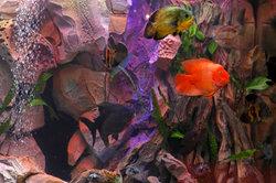 Süßwasseraquarien sind für Anfänger geeignet.