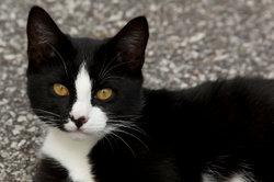 Wie könnte dieses schwarze Kätzchen wohl heißen?