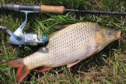 Fische zu bestimmen gehört zur Vorbereitung auf den Angelschein