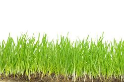 Sie können im Modellbau Rasen mit verschiedenen Materialien nachbilden.