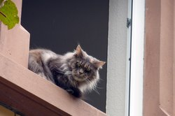 Die Katze mithilfe des Ortungschip wiederfinden.