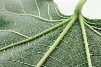 Mit der Zeit verstauben auch die Blätter von Grünpflanzen.