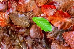 Im Handumdrehen können Sie lernen, Blätter voneinander zu unterscheiden.