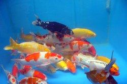 Welche Kosten sind bei der Haltung von Fischen zu beachten?