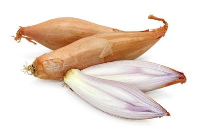 Die Schalottenpflanze ist eine Edelzwiebel, die Ihr Gemüsebeet und Ihren Speiseplan bereichert.