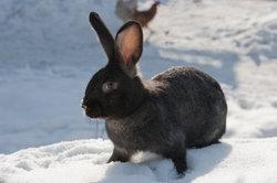 Im Winter können auch Kaninchen schnell frieren.