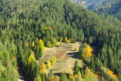 Die Serbische Fichte stammt aus dem Tara-Gebirge.