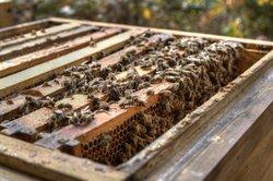 Bienenvölker lassen sich als Kunstschwarm verkaufen.