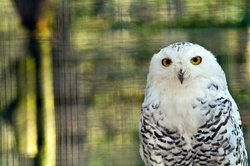 Hedwig hält bereits Ausschau nach Harry.