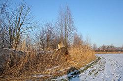 Bäume ruhen im Winter ohne Laub.
