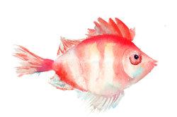 Auch ein Fisch kann eine einfache Übung sein.