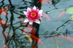 Ein schöner Teich wertet den Garten optisch auf.