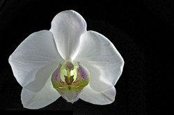 Um Orchideen richtig zu züchten, ist einiges zu beachten.
