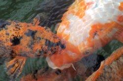 Durchlüftersteine helfen bei der Teichfischüberwinterung.
