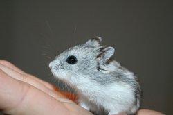 Hamster sind sehr stressanfällig.