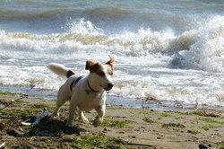 Strandurlaub mit Hund im Ostseebad Nienhagen