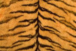 Einen Plüschtier-Tiger zu basteln schaffen auch Laien ganz schnell.