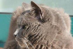 Auch Katzen können einen Schlaganfall bekommen.