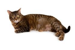 Eine Darmentzündung kann die Katze schwächen.