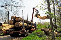 Holzgewinnung im Wald