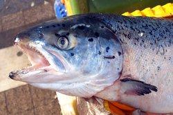 Lebertran wird aus Fischleber gewonnen.