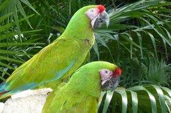 Viele Papageienarten sind meldepflichtig.