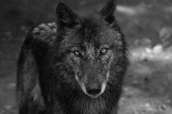 Wolfskinder - von unfassbaren menschlichen Tragödien ist die Rede