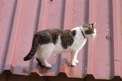 Beim Trapezblech ist die Dachneigung wichtig.