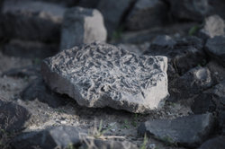 Der Mondstein ist nicht nur bei Esoterikern beliebt.