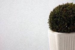 Ein Buchsbaum im Kübel auch im Winter feucht halten.