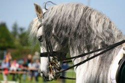 In der Traversale ist das Pferd in die Bewegungrichtung gestellt.