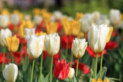 Grabbepflanzung mit farbenfrohem Frühlingsflair ist eine schöne Erinnerung an den Verstorbenen.