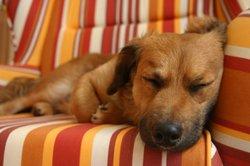 Schlafstörungen kommen auch bei Hunden vor.