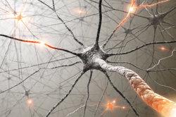 Nervenzellen leiten elektrische Impule weiter.