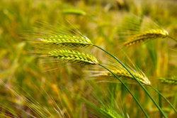 Gute Böden für gute Ernten