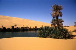 Wasser ist in der Wüste Leben - für Mensch und Pflanze.