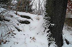 Windrichtung anhand von verschneiten Bäumen bestimmen