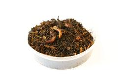 Regenwürmer gehören zu den wirbellosen Tieren.