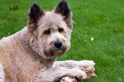 Vor allem beim Knochen verstehen Hunde keinen Spaß.