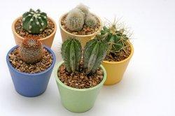 Zurückziehreaktion - Fremdreflex beim Kaktuspieks
