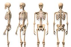 Die Wirbelsäule stützt den Körper.