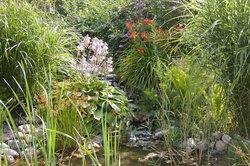 Mit sauberem Wasser hat man Freude am Teich.