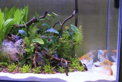 Schöne Pflanzen im Aquarium brauchen Dünger.