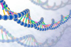 Selektionstypen - ein Begriff aus der Evolutionstheorie