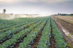 Die Vor- und Nachteile von ökologischer Landwirtschaft im Fokus