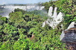 Ecofarming kann vielleicht den Regenwald retten.