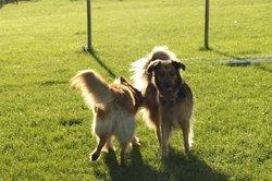 Unter Hunden ganz normales Verhalten - die Analkontrolle