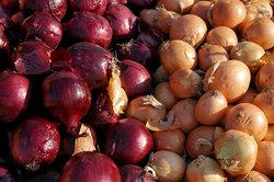 Die Zwiebel als Salzersatz ist begrenzt einsetzbar.